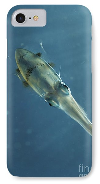 Colourful Squid, North Sulawesi Phone Case by Mathieu Meur
