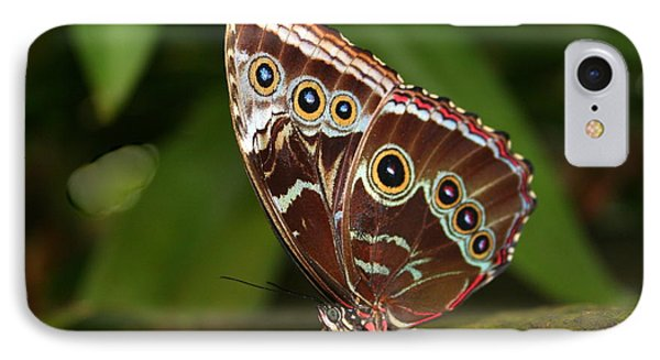 IPhone Case featuring the photograph Common Blue Morpho by Laurel Talabere