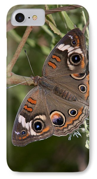 Common Buckeye Butterfly Din182 IPhone Case by Gerry Gantt