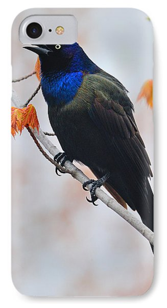 Common Grackle Phone Case by Tony Beck