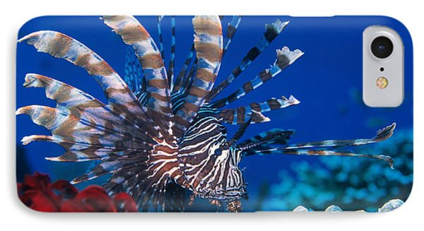 Common Lionfish Phone Case by Franco Banfi and Photo Researchers
