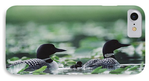 Common Loon Gavia Immer Mated Couple Phone Case by Michael Quinton