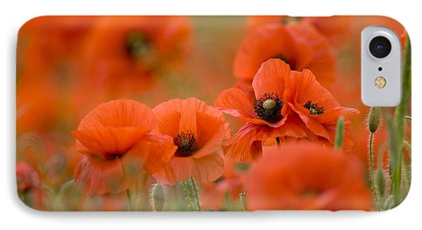 Common Poppies (papaver Rhoeas) IPhone Case
