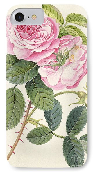 Common Provence Rose Phone Case by Georg Dionysius Ehret