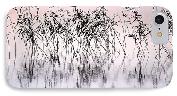 Common Reeds IPhone Case by Jouko Lehto