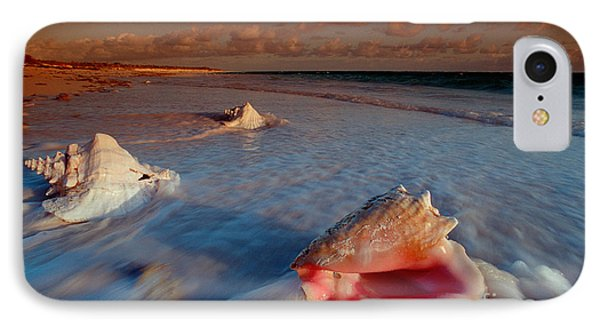 Conch Shell On Beach Phone Case by Novastock and Photo Researchers