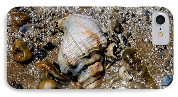 Conch IPhone Case by Toma Caul