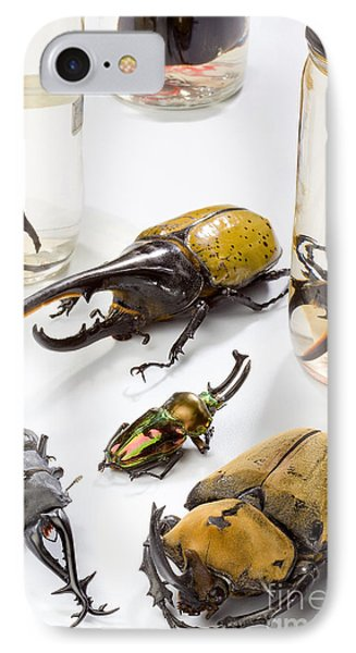 Confiscated Beetles Phone Case by Science Source