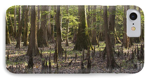 Congaree National Park  Phone Case by Dustin K Ryan