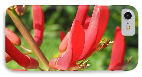 Coral Bean Tree IPhone Case by Mark Robbins
