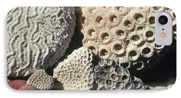 Coral Cobbles On Beach Of Bonaire Phone Case by Greg Dimijian