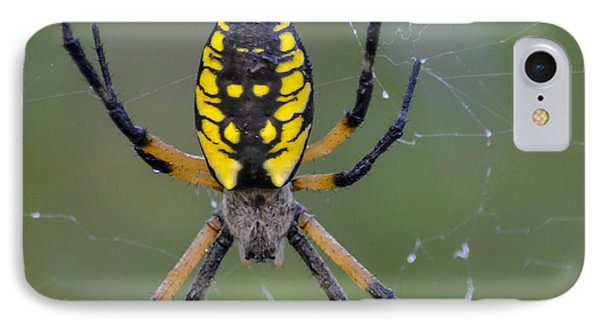IPhone Case featuring the photograph Corn Spider by Brian Stevens