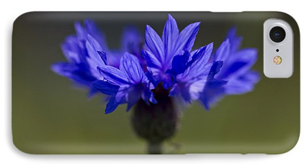 Cornflower Blue IPhone 7 Case by Clare Bambers