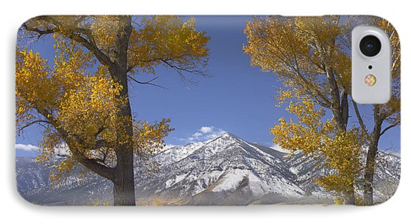 Cottonwood Trees Fall Foliage Carson Phone Case by Tim Fitzharris