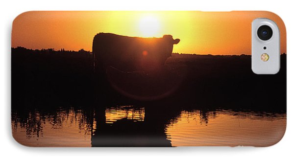 Cow At Sundown Phone Case by Picture Partners and Photo Researchers