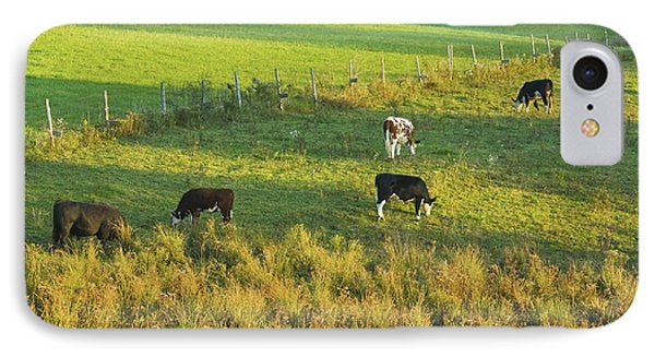 Cows Grazing In Late Day Light On Farm Maine IPhone Case by Keith Webber Jr