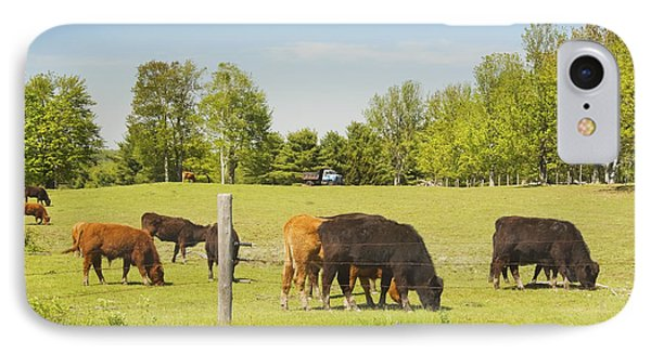 Cows Grazing On Grass In Maine Farm Field Spring IPhone Case
