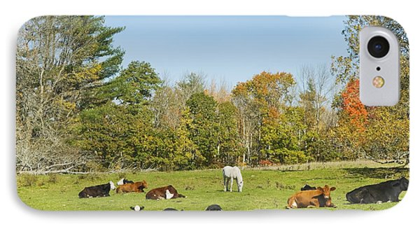 Cows Laying On Grass In Farm Field Autumn Maine IPhone Case by Keith Webber Jr