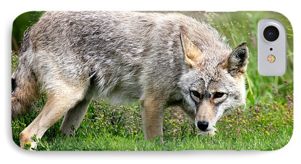 IPhone Case featuring the photograph Coyote On The Prowl by Kathy  White