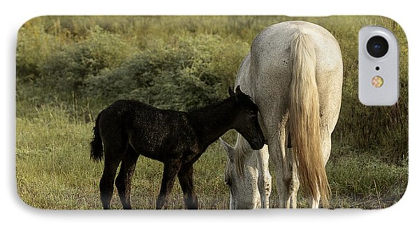 Cracker Foal And Mare IPhone Case by Lynn Palmer