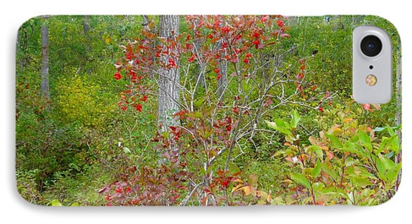IPhone Case featuring the photograph Cranberries With Early Autumn Colors by Jim Sauchyn