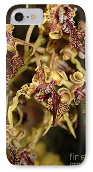 IPhone Case featuring the photograph Crazy Curly Orchid by Eva Kaufman