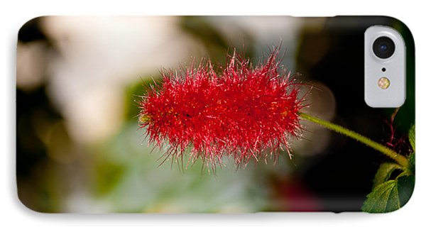 IPhone Case featuring the photograph Crimson Bottle Brush by Tikvah's Hope