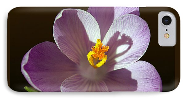 Crocus In Full Bloom Phone Case by Brian Wallace