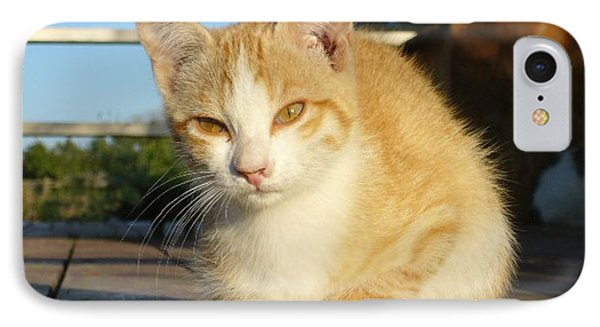IPhone Case featuring the photograph Curious Kitten by Jim Sauchyn