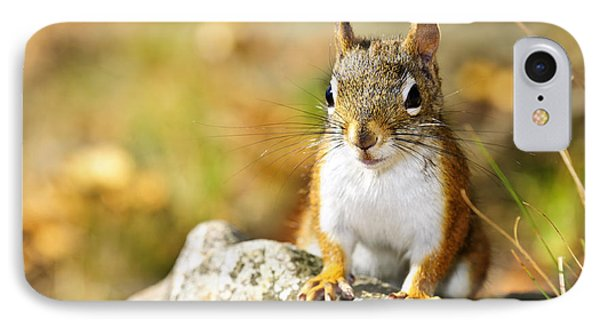Cute Red Squirrel Closeup IPhone Case by Elena Elisseeva