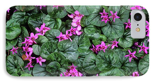 Cyclamen Flowers (cyclamen Coum) Phone Case by Bob Gibbons