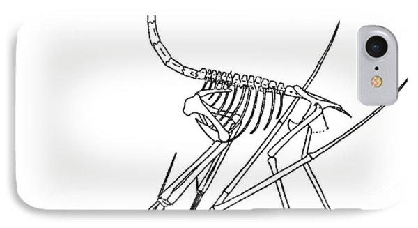 Cycnorhamphus Suevicus Phone Case by Science Source