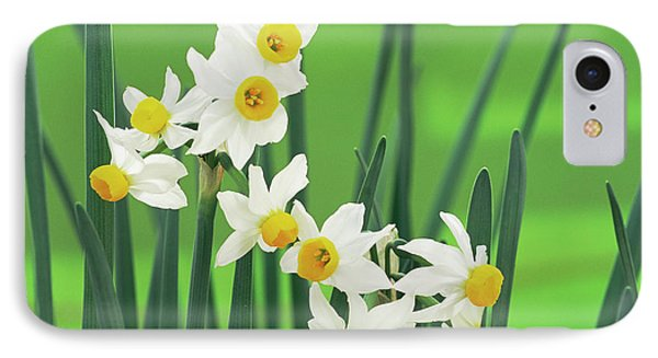 Daffodils (narcissus Canaliculatus) Phone Case by Archie Young