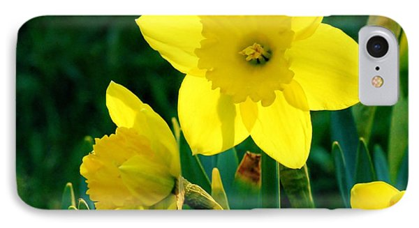 IPhone Case featuring the photograph Daffodils by Sherman Perry