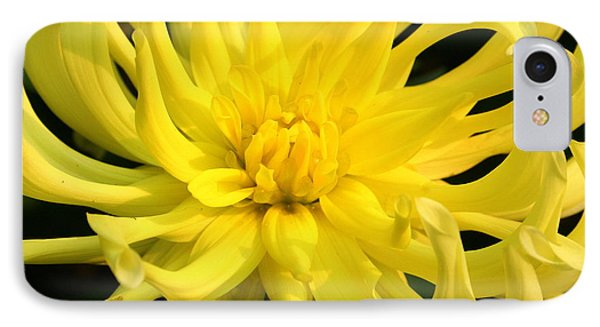 IPhone Case featuring the photograph Dahlia In Yellow by Laurel Talabere