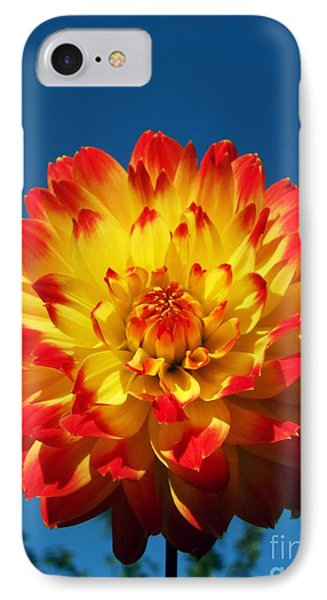 Dahlia 'procyon' Phone Case by Ian Gowland and Photo Researchers