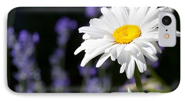 Daisy And Lavender Phone Case by Cindy Singleton