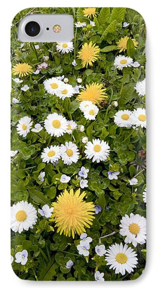 Daisy, Dandelions And Slender Speedwell Phone Case by Bob Gibbons