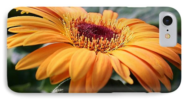 Daisy Delight IPhone Case by Bruce Bley