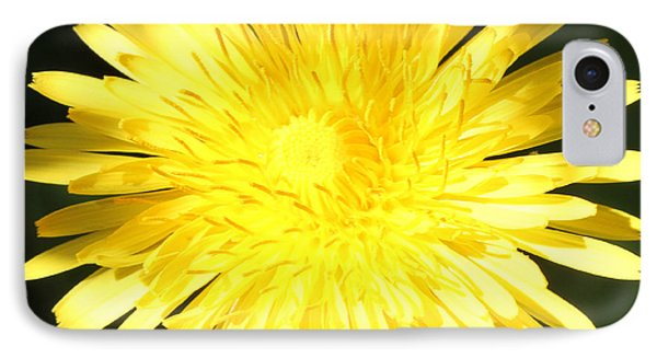 Dandelion Detail IPhone Case by Mark J Seefeldt