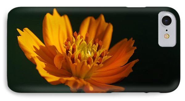 Dappled In The Morning Light Phone Case by Darren Fisher
