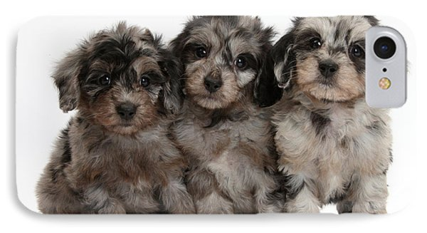 Daxiedoodle Poodle X Dachshund Puppies Phone Case by Mark Taylor