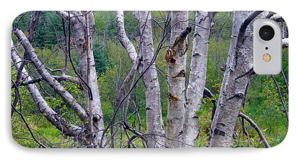 IPhone Case featuring the photograph Dead Birch Tree by Jim Sauchyn
