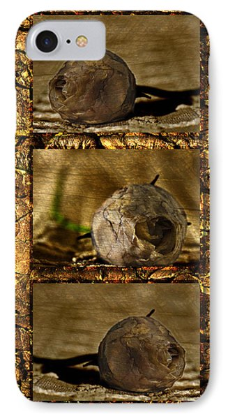 IPhone Case featuring the photograph Dead Rosebud Triptych by Steve Purnell