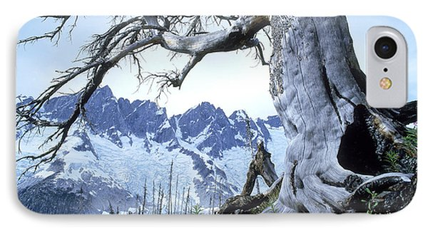Dead Spruce In Old Forest Fire, Nabob Phone Case by David Nunuk