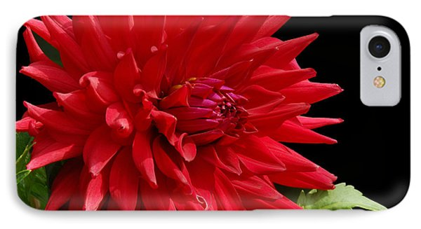 Decked Out Dahlia IPhone Case by Cindy Manero