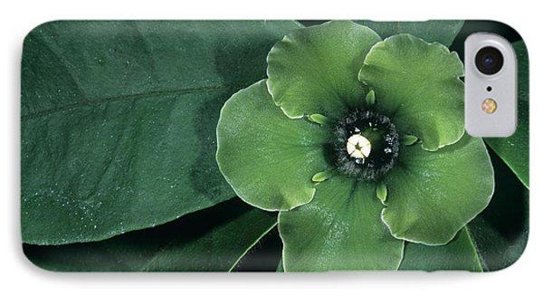 Deherainia Smaragdina Flower Phone Case by Bob Gibbons