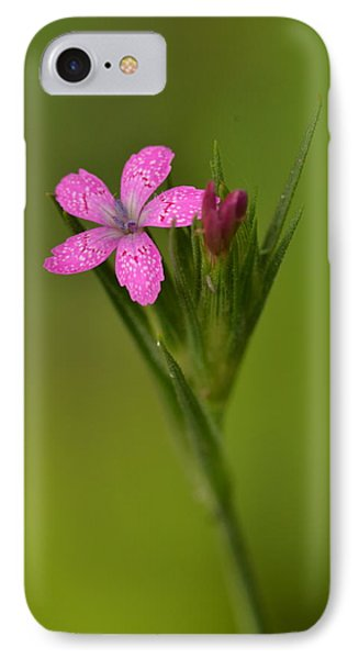 IPhone Case featuring the photograph Deptford Pink by JD Grimes
