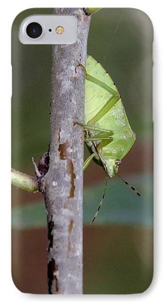Descent Of A Green Stink Bug Phone Case by Doris Potter