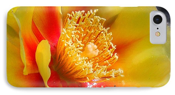 Desert Flower IPhone Case by Amy Williams